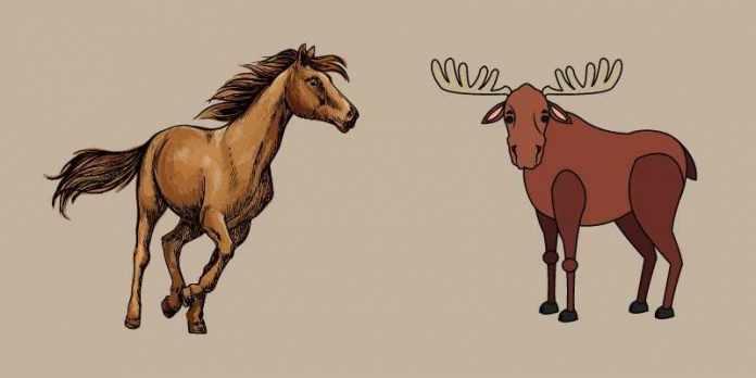 Moose size comarison